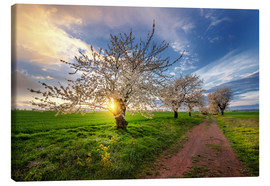 Canvastavla  Cherry trees in spring - Steffen Gierok