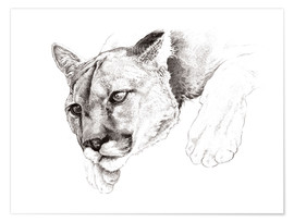 Premiumposter Sketch Of A Captived Mountain Lion