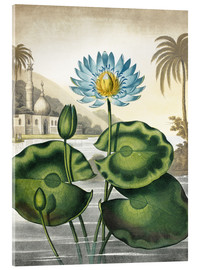 Akrylglastavla  The blue Egyptian water-lily - Robert John Thornton