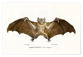 Premiumposter  Egyptian Fruit Bat - Raimundo Petraroja