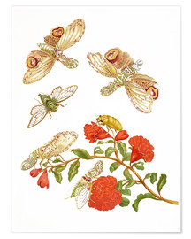 Premiumposter  Pomegranate with Lantern Fly and Cicada - Maria Sibylla Merian