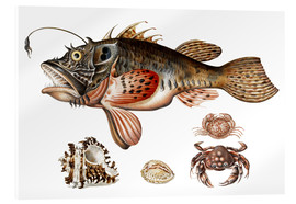 Akrylglastavla  Deep-sea fish, crabs and sea snails - Maria Sibylla Merian
