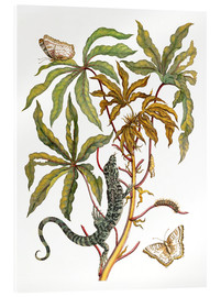 Akrylglastavla  cassava with crocodile and butterfly metamorphosis - Maria Sibylla Merian