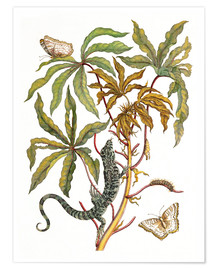 Premiumposter cassava with crocodile and butterfly metamorphosis