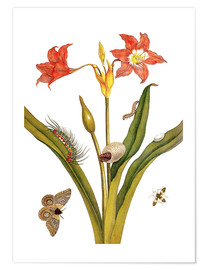 Premiumposter lily with lepidoptera metamorphosis