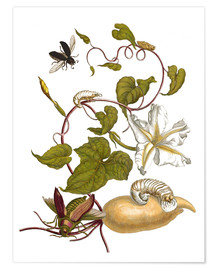 Premiumposter  white potato with lepidoptera metamorphosis - Maria Sibylla Merian