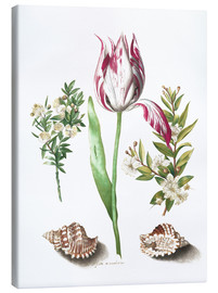 Canvastavla  Tulip with two myrtle branches and two shells - Maria Sibylla Merian