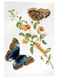 Akrylglastavla  Branch Of West Indian Cherry With Achilles Morpho Butterfly - Maria Sibylla Merian