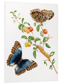 PVC-tavla  Branch Of West Indian Cherry With Achilles Morpho Butterfly - Maria Sibylla Merian