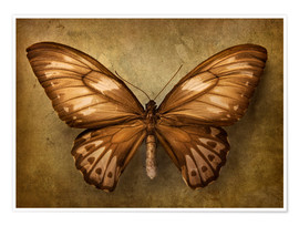 Premiumposter Brown butterfly