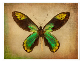 Premiumposter Green butterfly