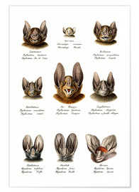 Premiumposter  Different Kinds Of Bats - Karl Joseph Brodtmann