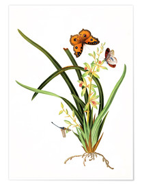 Premiumposter  Butterflies and a dragonfly on a plant