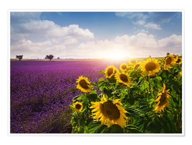 Premiumposter  Lavender and sunflowers fields , Provence - Elena Schweitzer