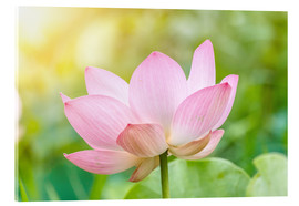 Akrylglastavla  Lotus flower and Lotus flower plants