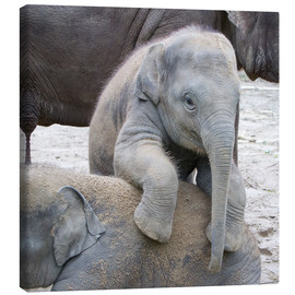 Canvastavla  Cute elephant baby