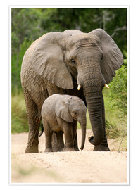 Premiumposter Mother and calf