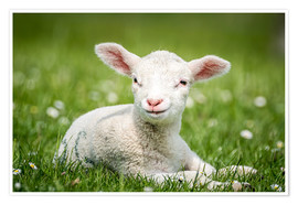 Premiumposter Happy lamb