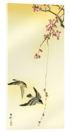 Akrylglastavla  Starlings and Cherry Tree - Ohara Koson