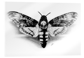 Akrylglastavla  Death Head Hawk Moth - Christian Klute