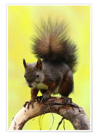 Premiumposter Squirrel on a branch