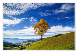 Premiumposter Isolated tree in autumn, Funes Valley, South Tyrol, Italy