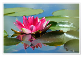 Premiumposter Water lily with reflection