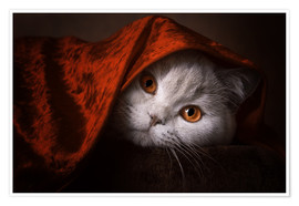 Premiumposter  Little Red Riding Hood? British short-haired cat under red blanket - Janina Bürger
