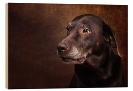 Trätavla  Old Chocolate Labrador Portrait - Janina Bürger
