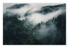 Poster Mystic forests in fog