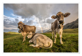 Premiumposter Rainbow and cows, Valtellina, Lombardy, Italy