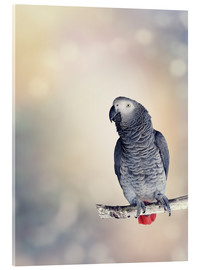 Akrylglastavla  African Grey on a branch