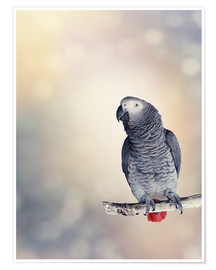 Premiumposter  African Grey on a branch