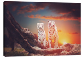 Canvastavla  Two white tigers