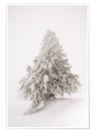 Premiumposter  Single snow covered tree in thick fog in winter  Rigi, Switzerland - Peter Wey