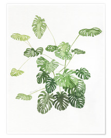 Premiumposter Monstera
