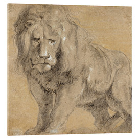 Akrylglastavla  Study of a lion - Peter Paul Rubens