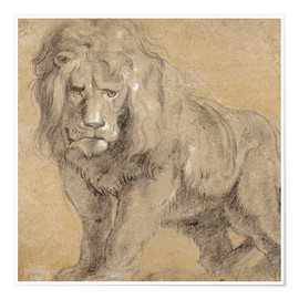 Premiumposter Study of a lion