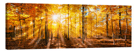 Canvastavla  Autumnal forest panorama in sunlight - Jan Christopher Becke