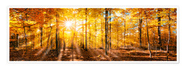 Poster  Autumnal forest panorama in sunlight - Jan Christopher Becke