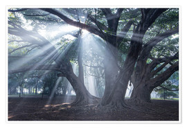 Premiumposter Light rays at sunrise in a forest