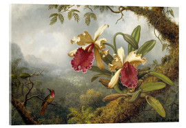 Akrylglastavla  orchids and hummingbird - Martin Johnson Heade