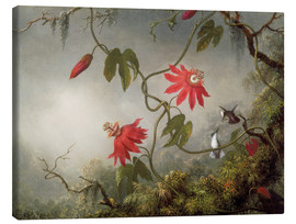 Canvastavla  Hummingbird on a passionflower - Martin Johnson Heade