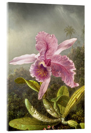 Akrylglastavla  Hummingbird and orchid (detail) - Martin Johnson Heade