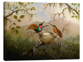 Canvastavla  Two hummingbirds at their nest - Martin Johnson Heade