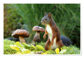 Premiumposter Squirrel on fodder search