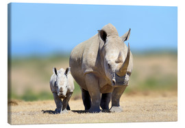 Canvastavla  White rhinoceros with young in Kenya, Africa