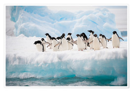 Premiumposter  Adelie penguins on ice