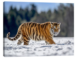 Canvastavla  Siberian tiger in deep snow