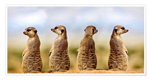 Premiumposter Four meerkats - four thoughts